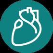 القلب والاوعية الدموية